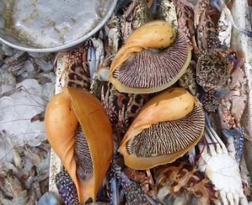 Seafood in Malaysia